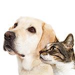 Cani & Gatti